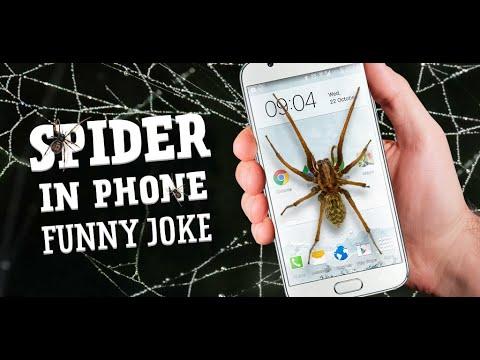 Vídeo do Aranha no Telefone - Piada