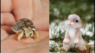 Cute baby animals Videos Compilation cute moment of the animals Cutest Animals - Soo Cute #2
