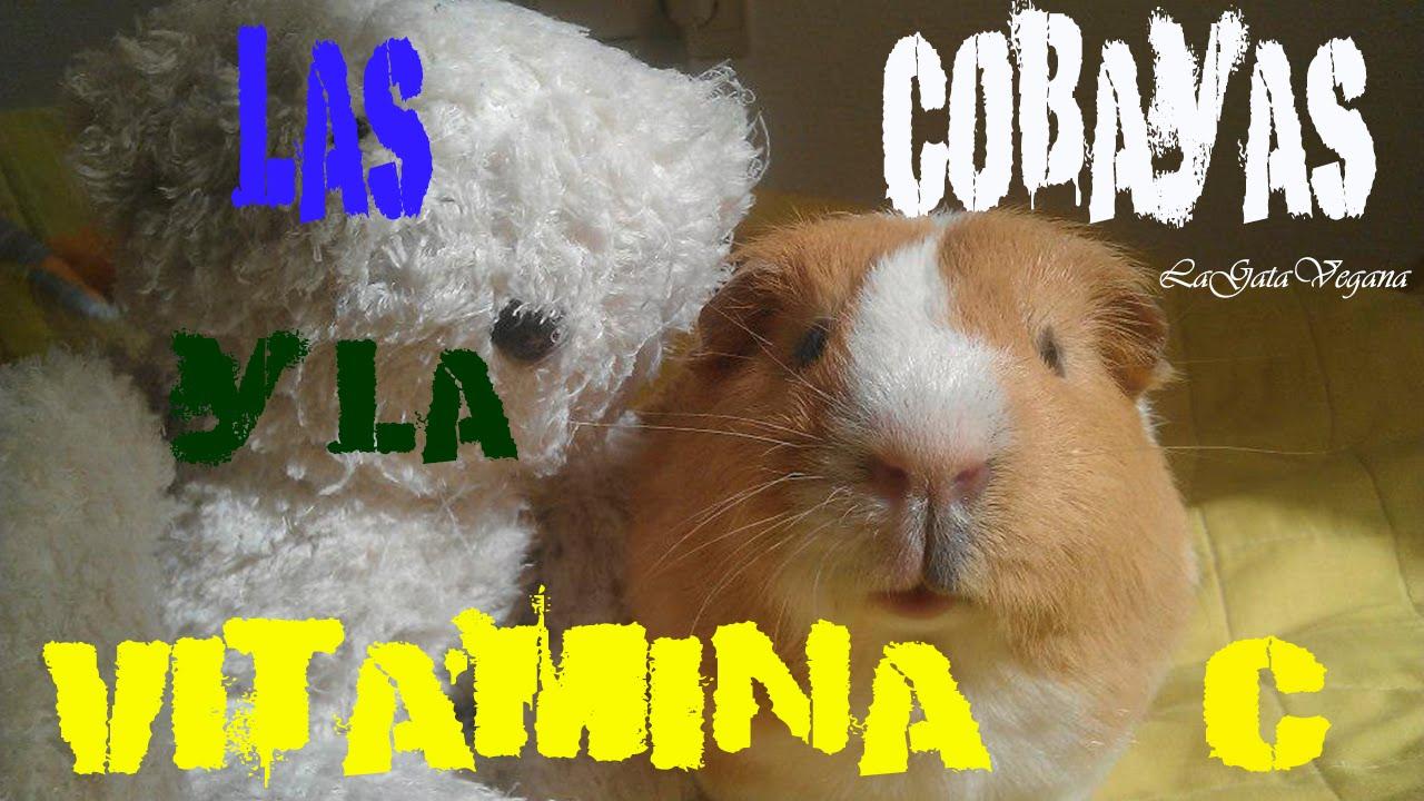 LA VITAMINA C Y LAS COBAYAS / LA IMPORTANCIA DE DARLES VITAMINA C PARA LA SALUD DE LAS COBAYAS