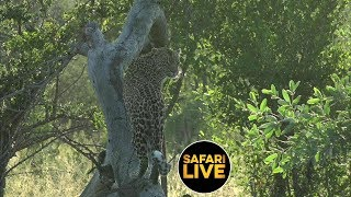 safariLIVE - Sunrise Safari - March 20, 2019