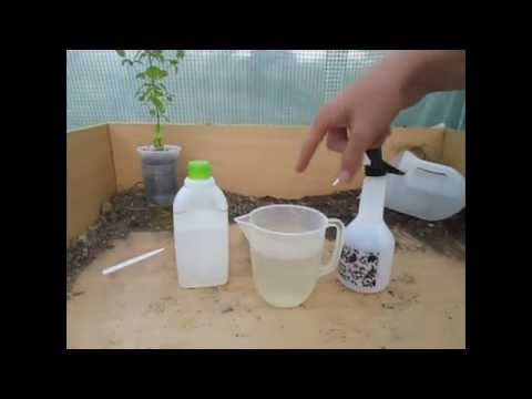 , title : 'How to Make a simple Organic Insecticide Spray (Aphids, Blackfly, Whitefly etc)