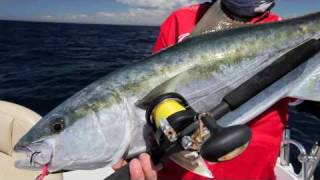 Fishing Sydney - kingfish jigging [VIDEO]