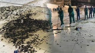 Ribuan Serangga Hitam Serbu Masjidil Haram, Buat Warga dan Pakar Hewan Keheranan