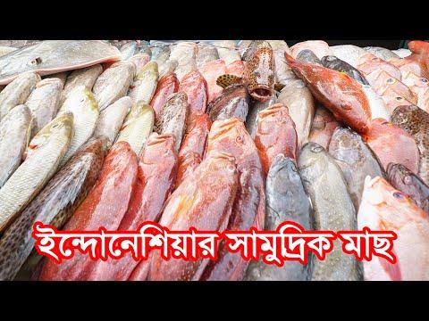 ইন্দোনেশিয়ার সামুদ্রিক মাছ
