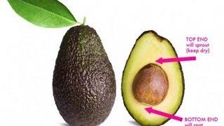 Vitamix High Fiber Avocado Pit Green Smoothie