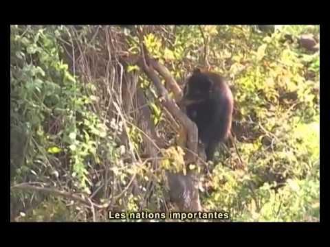 Chaparri, les sept ours de la montagne sacrée (2013)