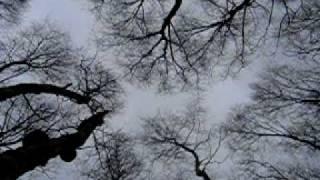 Video Stromy