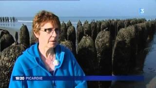 Moules de Bouchot : début de saison en Baie de Somme