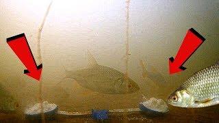 Реакция рыбы на ВАНИЛИН!!! Подводная съемка