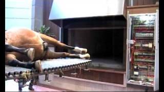 First horse Cremation System /paarden crematieoven Jongenelen Burning Systems