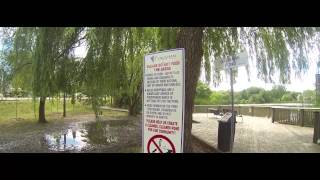 preview picture of video 'Turtles at Oakbank Pond, Thornhill, Ontario'