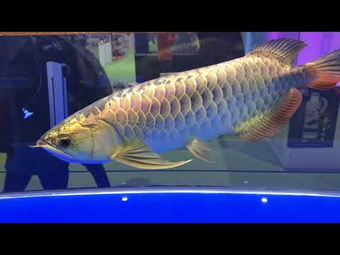 China's BIGGEST Aquarium Event Part 2