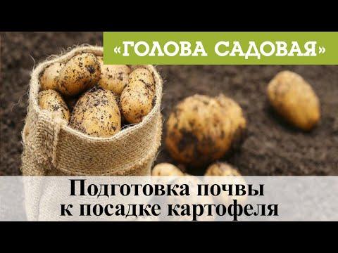 Голова садовая - Подготовка почвы к посадке картофеля