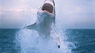 Нападение акул. Красный треугольник.