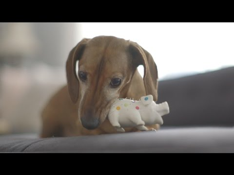 Puppy Talks To His Toy