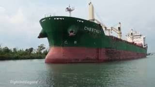 Ship CHESTNUT passing tug PETITE FORTE on Welland Canal