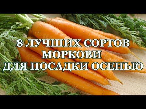 8 ЛУЧШИХ сортов МОРКОВИ  под ЗИМУ! Сорта моркови под зиму.
