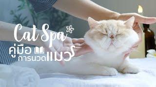คอร์สสอนนวดแมว ที่ทาสแมวต้องดู  : Cat Spa 🐱🌸