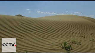 Combatting Desertification: Chinese herdsmen dedicated to turn desert into oasis