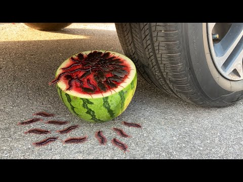 汽車碾壓各種物品