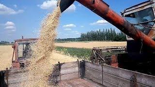 Убрали озимый ячмень 2018.  Комбайн Нива-СК 5 #Сельхозтехника ТВ