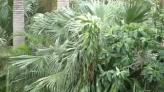 preview picture of video 'Le code del ciclone Tomas a Lautoka'