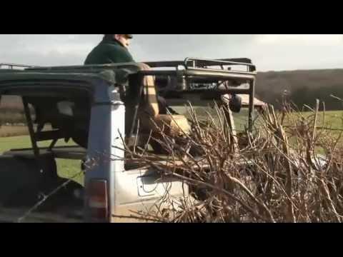 Monster rabbiting truck