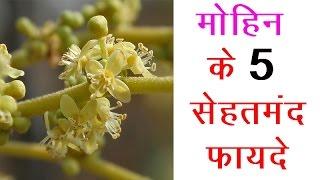 मोहिन के 5 सेहतमंद फायदे | Hindi Health Tips - Download this Video in MP3, M4A, WEBM, MP4, 3GP