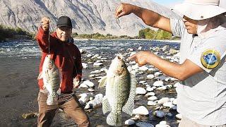 Vea el pique de GRANDES #tilapias en el ANZUELO y CORDEL de MANO de los dos Pescadores [ Parte 2 ]