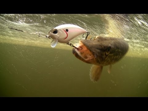 Fishing: catching pike with bass lures. Рыбалка щука на воблер. Snoek szczupak muskie lucio haug