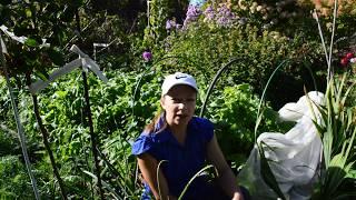 Что делать в огороде в сентябре
