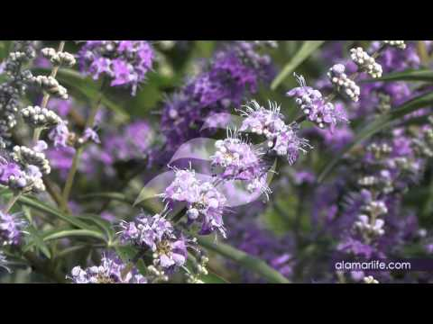 EXPERIENCE NATURE - cespuglio viola - cromoterapia, video rilassanti, natura benessere, feng shui