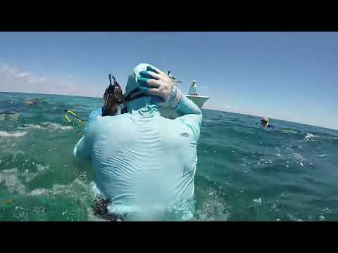 Акула атаковала подводного охотника