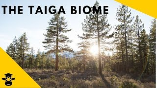 The Taiga-( Boreal Forest)-Biomes of the World