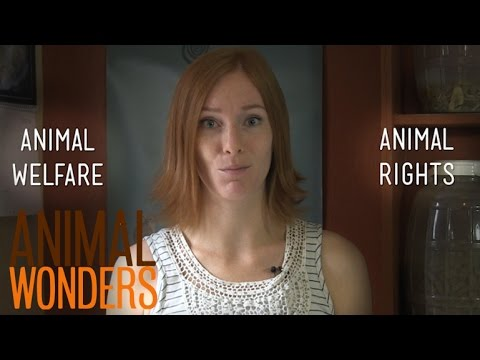 Thumbnail for Animal Welfare Vs. Animal Rights