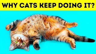 Why Cats Lie on Their Backs When They See You