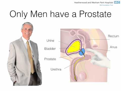 Increase in the central zone of the prostate
