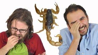 Böcek Yeme Kapışması (Çekirge, Cırcır Böceği, Akrep Yedik)