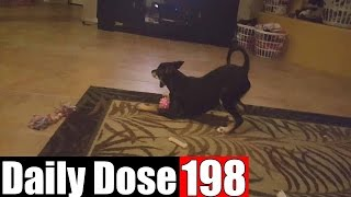 #DailyDose Ep.198 - CRAZY PUPPY AND SQUEAKY TOYS! | #G1GB