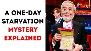 A One-Day Starvation Secret Got the Nobel Prize