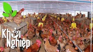 Tiết lộ bí quyết giúp gà mái đẻ sai hết trứng - Khởi nghiệp 420 I VTC16