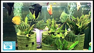 Fish Store Tour - Advanced Aquariums - Some Cool and Unusual Fish!