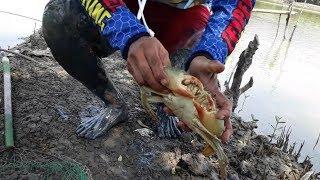 Mancing Kepiting Bakau Umpan Menggunakan Belut