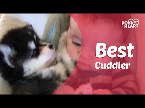 Adorable Baby Cuddles With Husky Puppy in Rocker