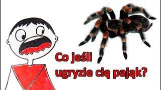 Co jeśli ugryzie cię najbardziej jadowity pająk na świecie?