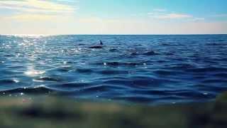 2illusions   Ocean