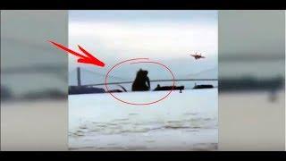 5 гигантских существ снятых на камеру