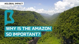 Why is the Amazon so important?