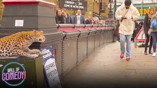 LEOPARD PRANK! - In Camden Town!