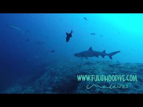 Scuba diving in the Maldives